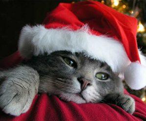 Descargar Imagenes De Gatos Navideños