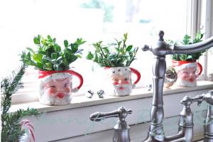 plantas-con-santa-claus