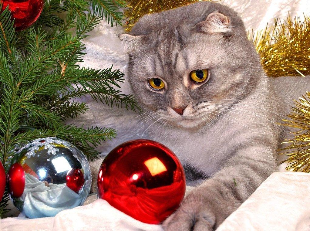 Imagenes de gatos en navidad