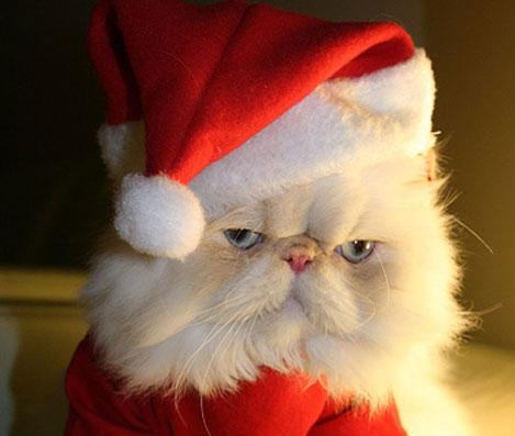 Imagenes de un gatito con gorro de navidad