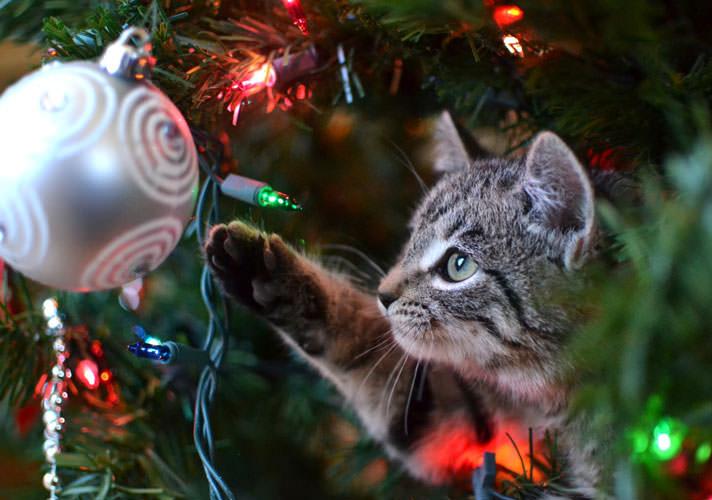 Gatito jugando bola de navidad