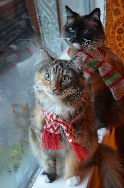 Gatos navideños para fondo de celular