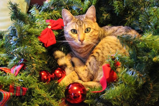 Imagen de gato durmiendo en el arbol de navidad