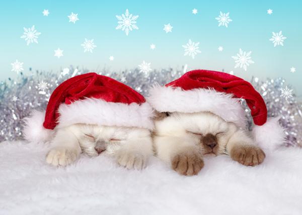 Imagen navideña de unos gaticos con gorro