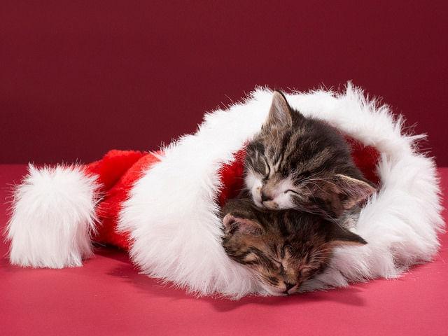 Imagen tierna de unos gatitos dentro de un gorro de navidad