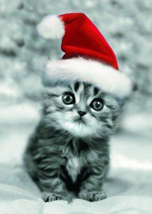 Linda imagen de un gatito con gorro de navidad para perfil