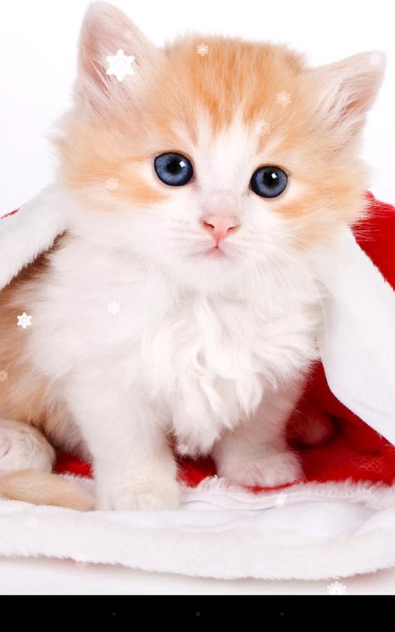Tierna imagen para fondo de celular con un gatito navideño