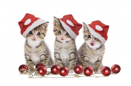 Tres gatos navideños para whatsapp
